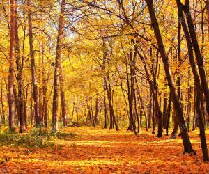 У лес... І з лесу