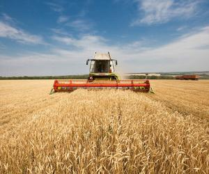 Аграрыі імкліва набліжаюцца да завяршэння ўборкі хлеба з палёў