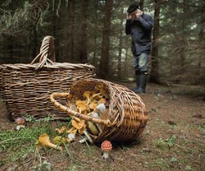 Непредвиденные путешествия. Как не потеряться в лесу?