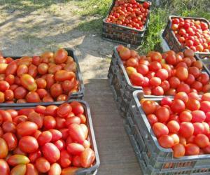 Как и чем живет бывшая «помидорная столица» Беларуси?