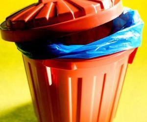 Тайны мусорного ведра
