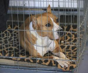 Как провозить собак через границу ЕАЭС?