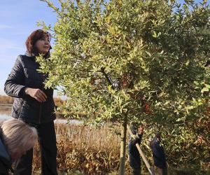 Падчас акцыі «Чысты лес» валанцёры добраўпарадкавалі больш за 2000 аб'ектаў
