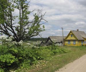 Почему борщевик Сосновского занял большие территории в нашей стране?