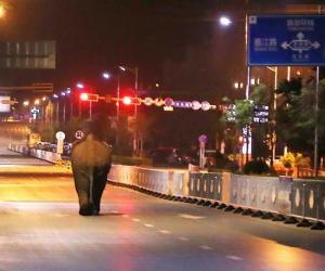 У цэнтры Пуэра бадзяўся слон