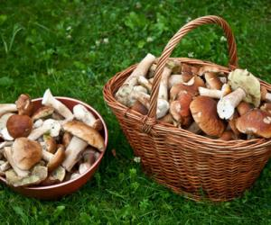За грибами в Налибокскую пущу лучше не ходить