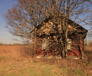 Як аднаўляюцца тэрыторыі, якія пацярпелі ад чарнобыльскай катастрофы