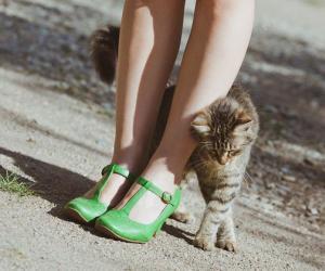 От хвоста до кончиков ушей: как читать кошачий язык тела?