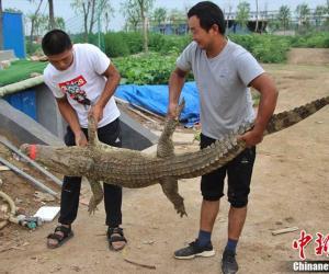Крокодилы на ферме