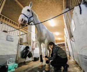 Як жыве адзіная школа коннага спорту ў Мінскай вобласці