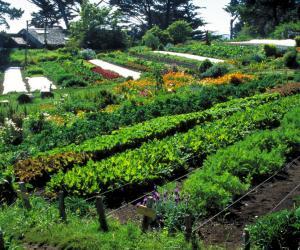 Сохраняя воду, сберечь плодородие почв