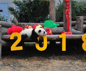 Новогодние поздравления от медвежат