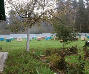 РОО «Белорусские пчеловоды» приглашает на семинар «Поможем пчелкам зимовать».