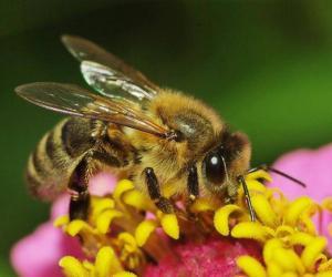 """РОО """"Белорусские пчеловоды"""" приглашает на встречу и выставку"""
