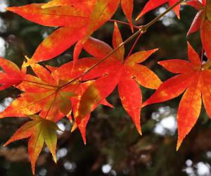 Восень — пара любові і лістоў