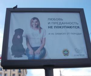 Собаки и кошки – не вещи, а живые существа