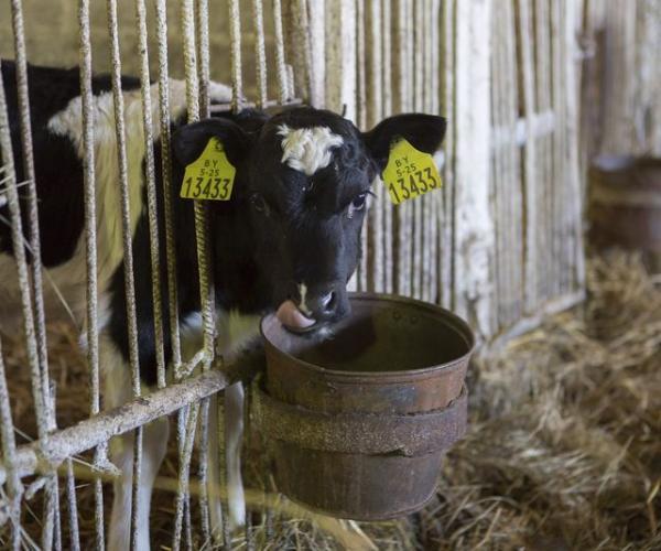 Почему модернизация молочных комплексов не всегда дает должный эффект