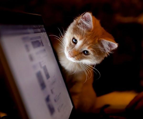 От хвоста до кончиков ушей: как читать кошачий язык тела