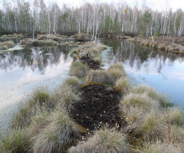 Остановить разрушение почв