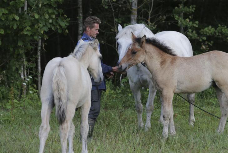 Коні Якава