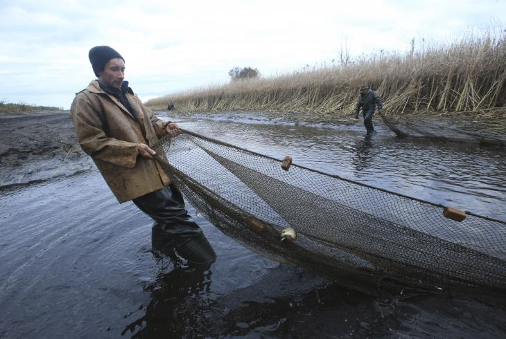 У доследным рыбгасе «Белае» заканчваецца чарговы рыбны сезон