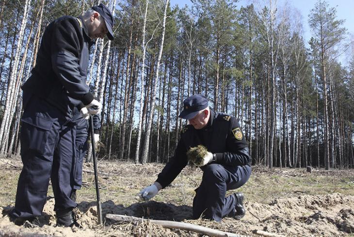 У Беларусі праходзіць Тыдзень лесу