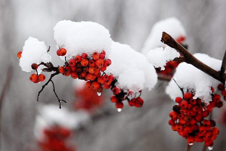 У Віцебску выпаў снег
