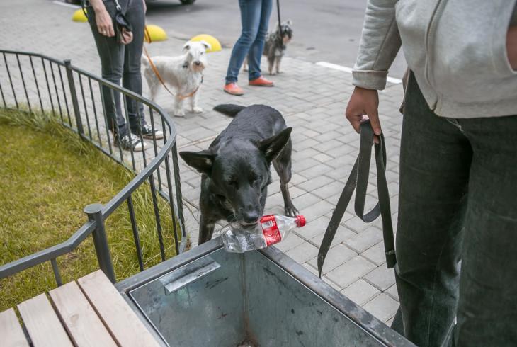 У Мінску правялі майстар-клас па дрэсіроўцы сабак