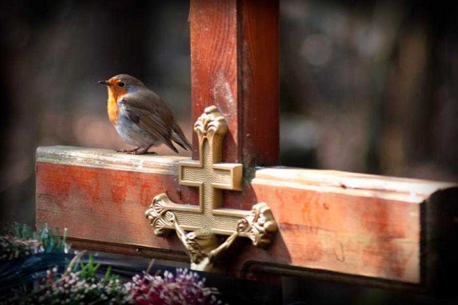 Радуница: кто первым придет на кладбище, получит благословение
