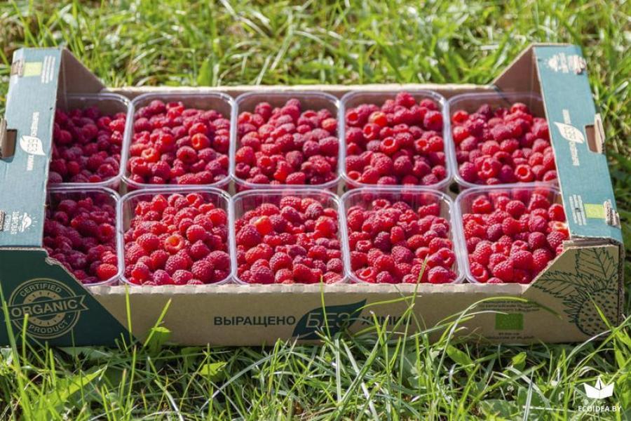Ярмарка органической и экологической пищи пройдет в Минске 25 августа