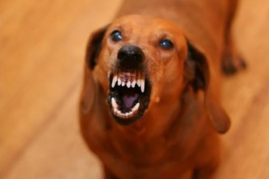 В начале августа в поселке Ратомка собака сильно покусала за лицо восьмилетнюю девочку