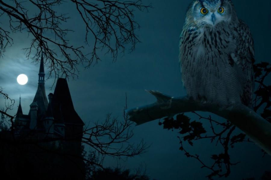 Говорят, что Анна Радзивилл превращается каждую ночь в сову