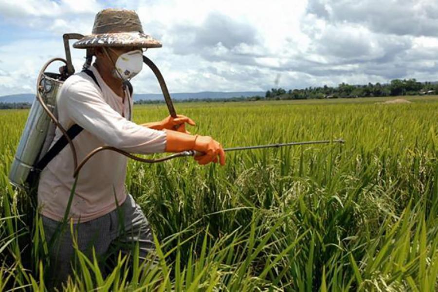 Как пестициды и другие химические вещества вредят природе и человеку?
