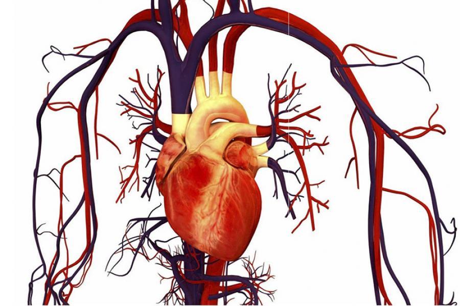 Как сохранить сердце и сосуды здоровыми