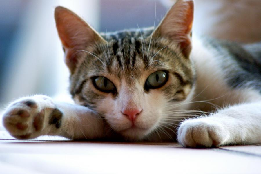 Страшнее кошки зверя нет? или Виновна наша любимица