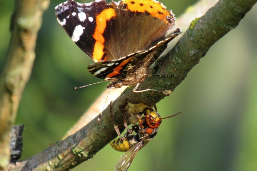 Мир насекомых и их «знакомых»