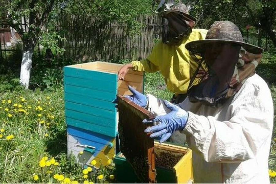 Юные пчеловоды, покажите знания!