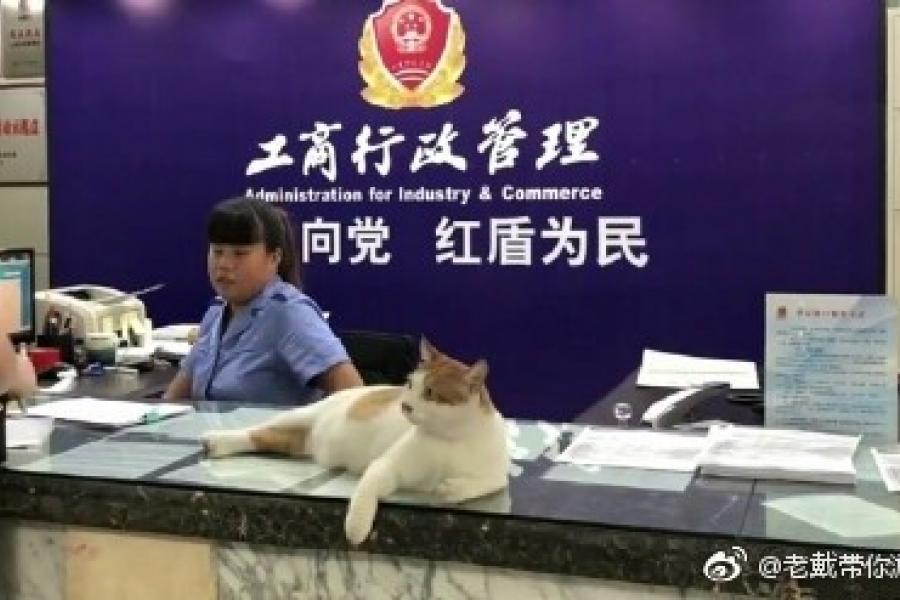 Кот «устроился» на госслужбу