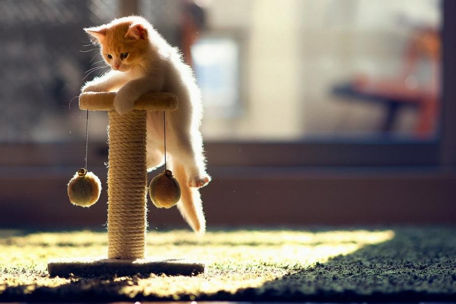 Новые грани кошки