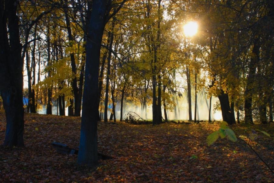 Золотая осень в Смиловичах (видео)