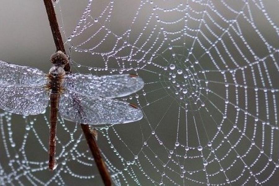 Кітайскія навукоўцы распрацавалі штучнае павуцінне