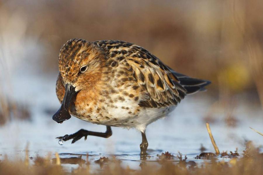 На юге Китая найден исчезающий вид птиц